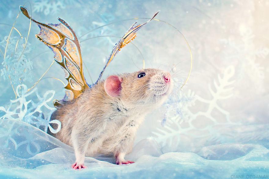 Фотографии домашних крыс Диана Оздамар 20