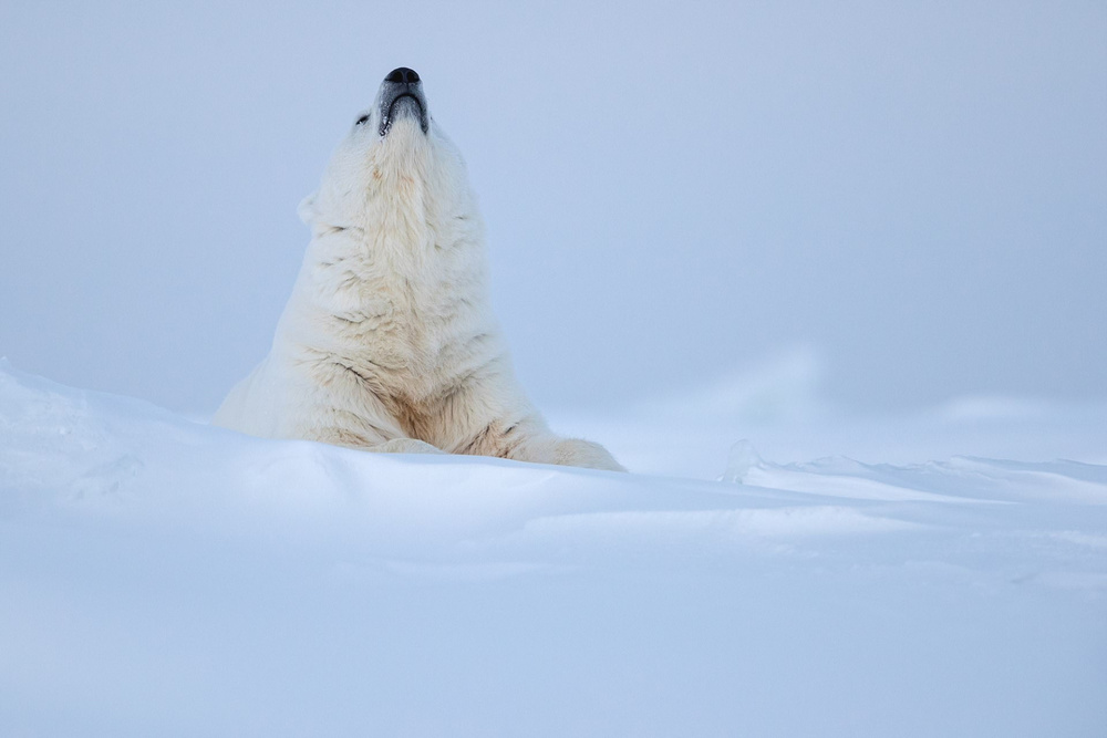 Ghosts of the Arctic: polar bears, reindeers and stunning landscapes of the polar archipelago 2