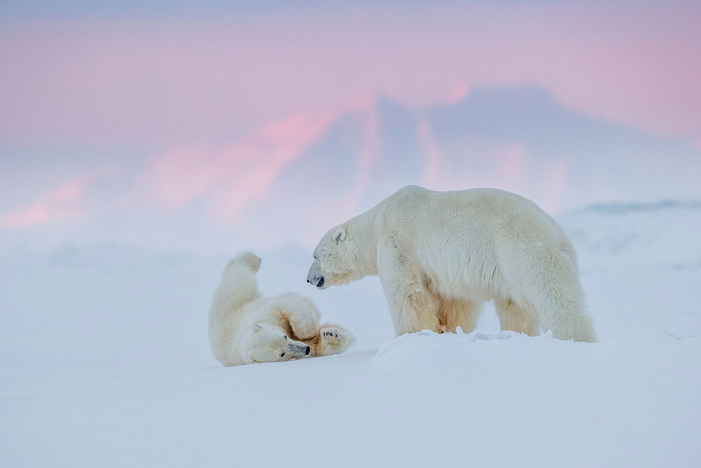 Ghosts of the Arctic: polar bears, reindeer and amazing landscapes of the polar archipelago 6