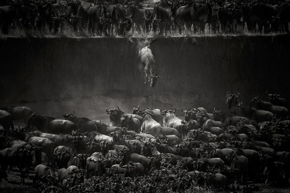 Победители конкурса чёрно-белой фотографии MonoVisions Photography Awards  16