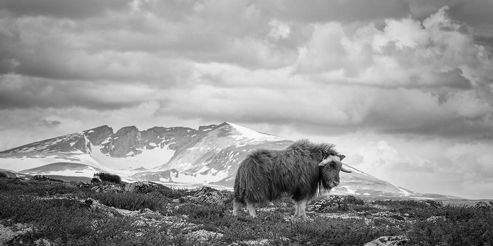 Победители конкурса чёрно-белой фотографии MonoVisions Photography Awards  18