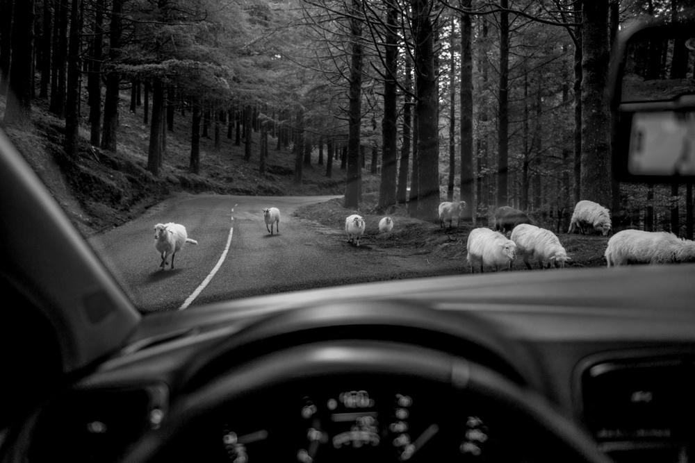 Победители конкурса чёрно-белой фотографии MonoVisions Photography Awards  36