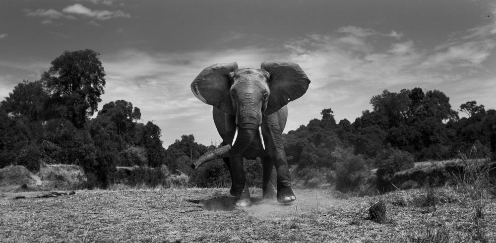 Победители конкурса чёрно-белой фотографии MonoVisions Photography Awards  37