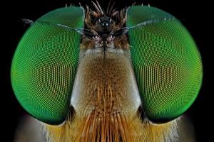 Неземные образы в блестящих макрофотографиях Дональда Джуса