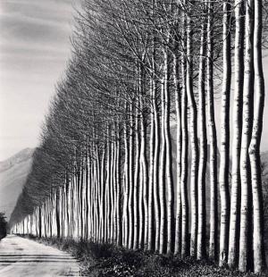 Фотоанализ длиною в жизнь Майкла Кенны