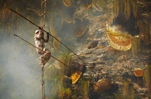 Гурунги - охотники за медом в фотопроекте Эндрю Ньюи (Andrew Newey)
