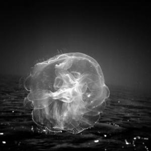 Подводные фотографии морских животных от Хенгки Коентжоро (Hengki Koentjoro)