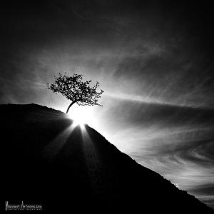 Волшебное освещение в черно-белой фотографии - 50 замечательных примеров