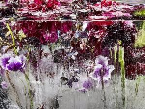 Цветы, замороженные во льду, похожи на акварельные картины