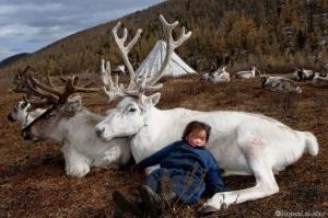 Беспрецедентные фотографии из повседневной жизни кочевников-оленеводов
