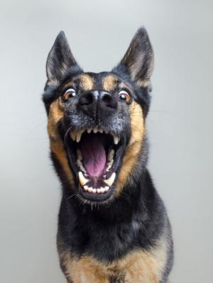 Экспрессивные портреты собак от фотографа Эльке Фогельзанг