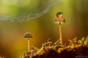 Яркие лягушки в макрофотографиях Вил Миер
