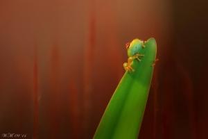 Волшебные макро миры фотографа Уил Мийер