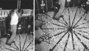 Эксперимент «Вселенная-25»: как «мышиный рай» стал «мышиным адом»