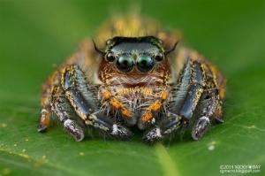 50 блестящих макрофотографий насекомых. Фотограф Ники Бэй