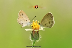 Удивительные насекомые в макрофотографии от Дэнни Уда