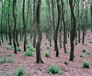 «Зелёная тишина». Фотограф Даниэль Коваловский