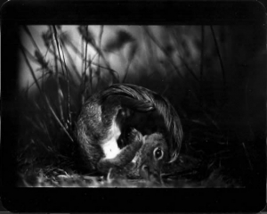 Животные в уникальных чёрно-белых фотографиях Джакомо Брунелли