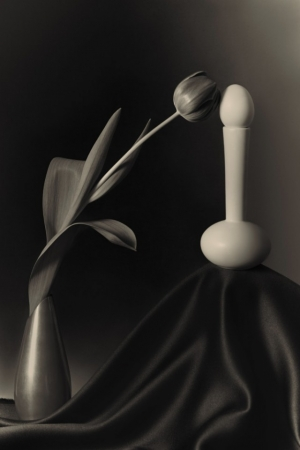 Искусство чёрно-белого натюрморта. Фотограф Уильям Кастеллана