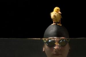 Девушка-пловчиха и ее утенок в серии очаровательных фотографий Хуана Осорио