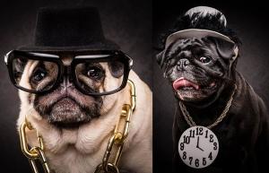 Фотопроект Адама Джекман-Мура: портреты мопсов в стиле исполнителей хип-хопа 80-х и 90-х
