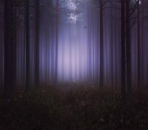 На край ночи за тишиной. Фотограф Мика Суутари