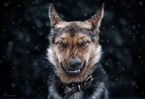 Супер портреты животных от фотографа Сергея Полюшко (35 снимков)