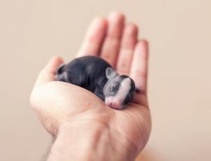 Кроличьи хроники - 30 первых дней жизни в умиляющих фотографиях