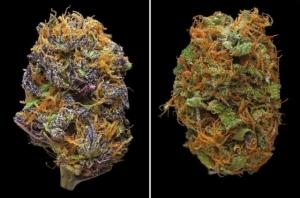 Макрофотографии марихуаны от фотографа Эрика Кристиансена