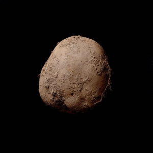 Он продал фотографию картофеля за 1 миллион евро и снимает портреты самых влиятельных людей Кремниевой долины за 150 000 долларов