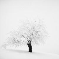 «Зимнее хайку» – фотографическая лирика Андрея Бачу