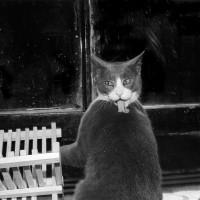 Хроники Эрни – мемуары фотографа, посвящённые коту