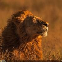 Мир глазами победителей фотоконкурса National Geographic