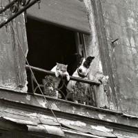 Коты и собаки в работах фотомастеров от классиков до современников
