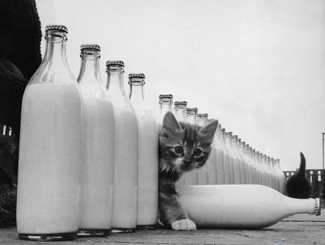 Бутылки молока и котёнок, 1946. Автор Курт Хаттон