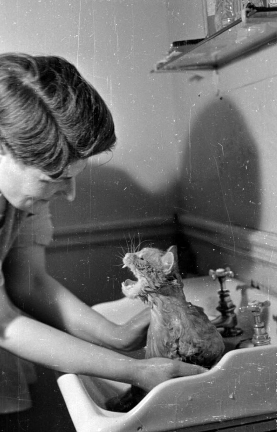 Купание кота. Автор Курт Хаттон