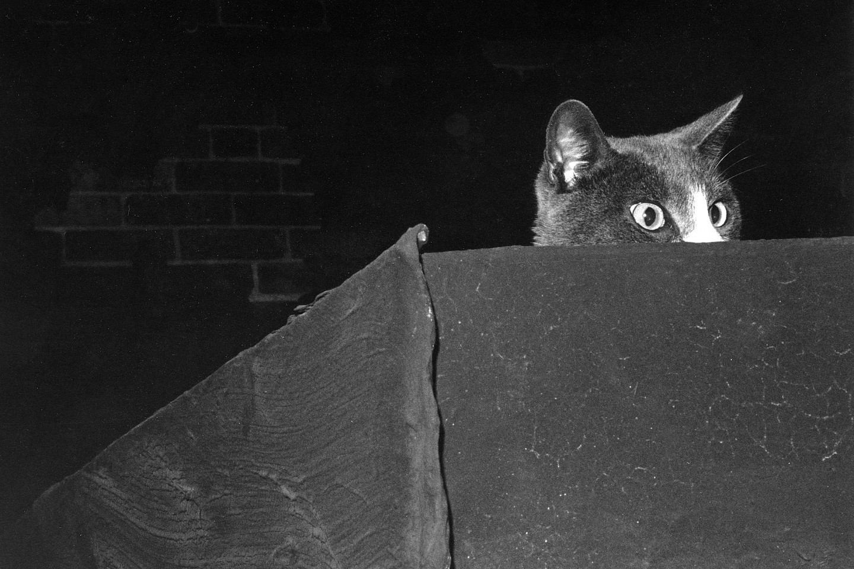 «Эрни – шпион на крыше». Автор Тони Мендоса