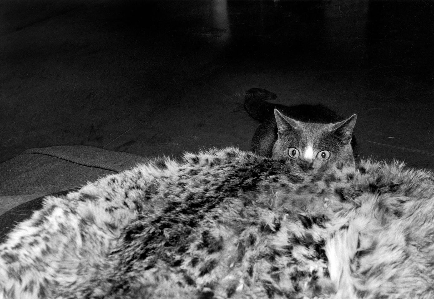 Притаившийся кот. Автор Тони Мендоса