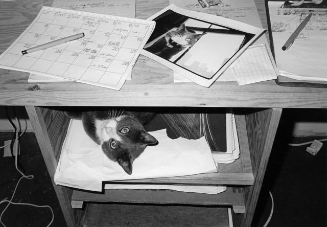 Эрни под столом. Автор Тони Мендоса