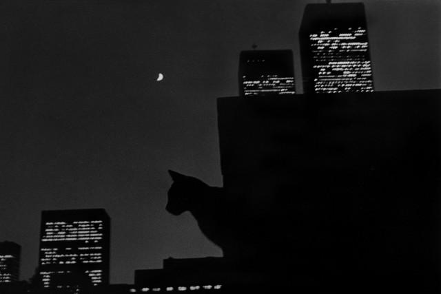 «Эрни - мемуары фотографа». Автор Тони Мендоса (30)