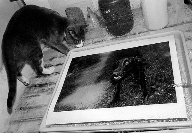 «Эрни - мемуары фотографа». Автор Тони Мендоса (4)