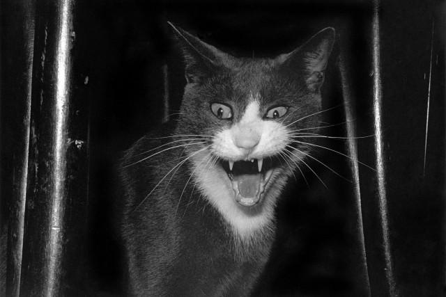 «Эрни - мемуары фотографа». Автор Тони Мендоса (9)