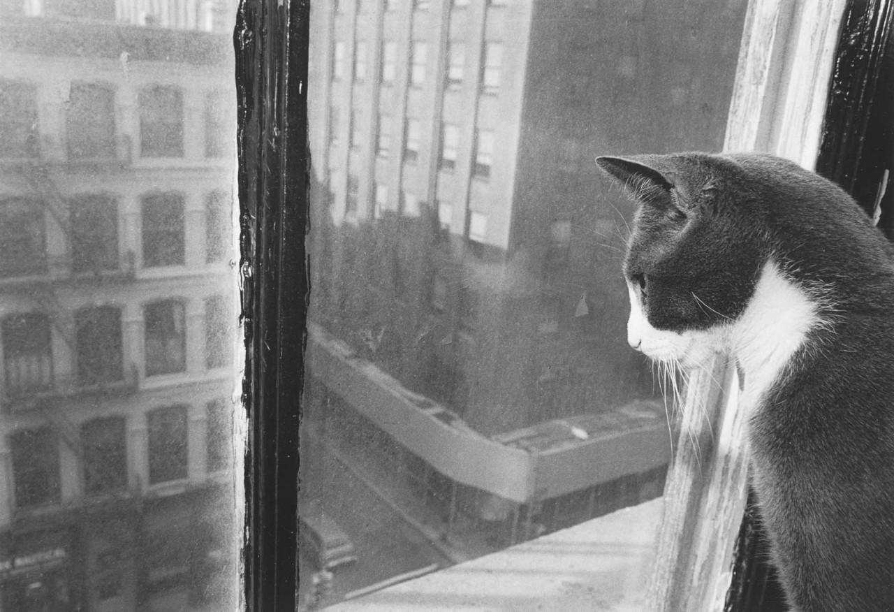 «Эрни - мемуары фотографа». Автор Тони Мендоса (12)