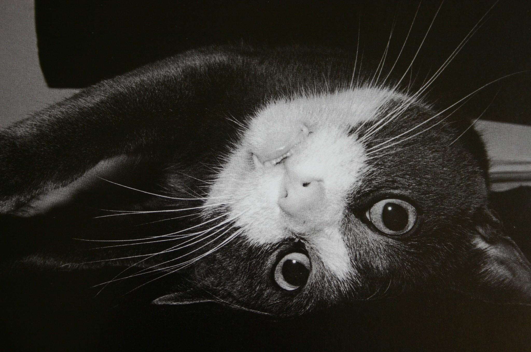 «Эрни - мемуары фотографа». Автор Тони Мендоса (13)