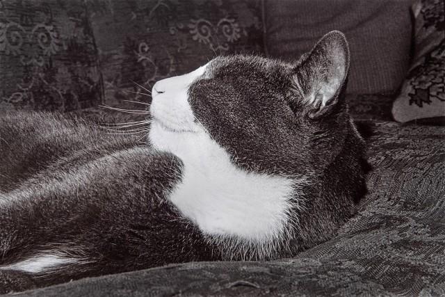 «Эрни - мемуары фотографа». Автор Тони Мендоса (16)