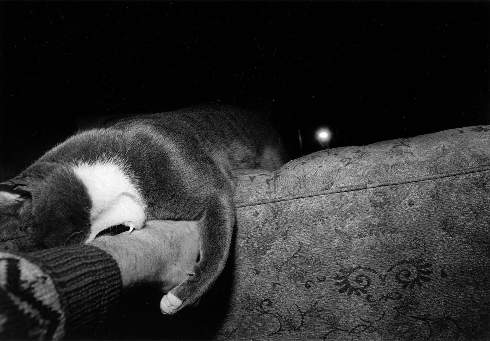«Эрни - мемуары фотографа». Автор Тони Мендоса (19)
