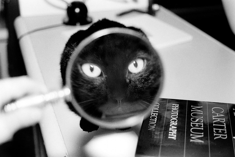 «Эрни - мемуары фотографа». Автор Тони Мендоса (20)