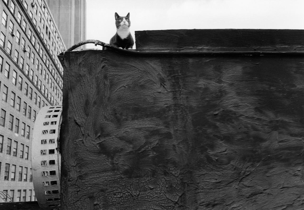 «Эрни - мемуары фотографа». Автор Тони Мендоса (21)