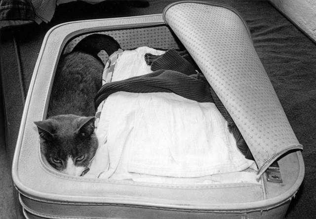 Бесценный багаж. Автор Тони Мендоса