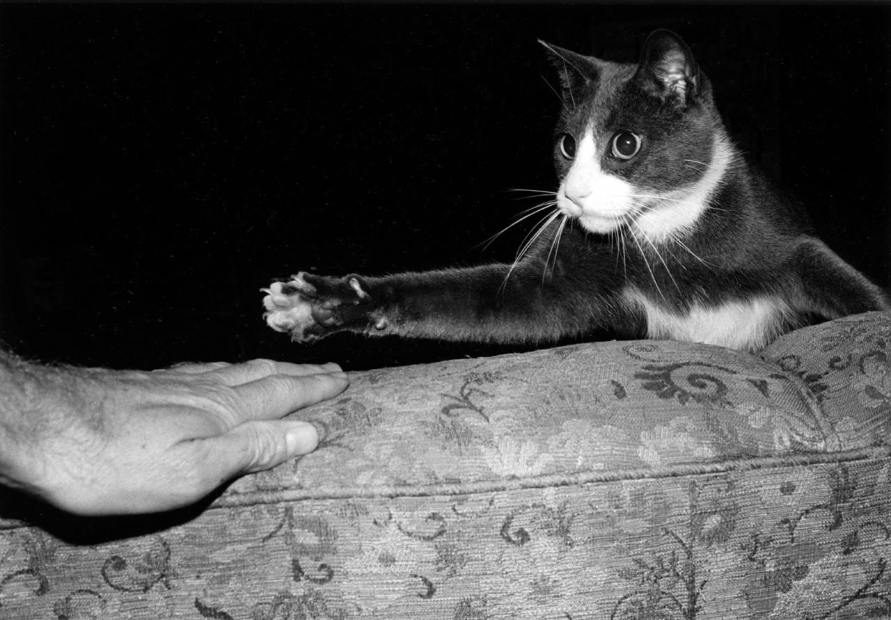 Игра с котом, от которой остаются шрамы. Автор Тони Мендоса